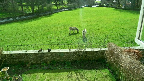 Thornley House: donkeys