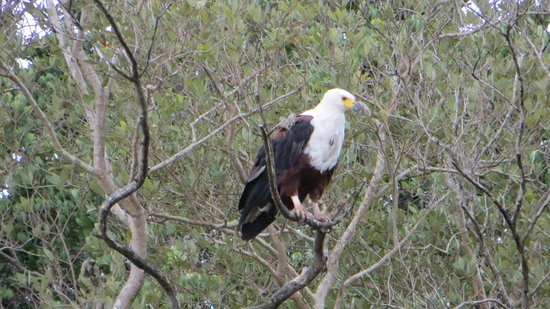 Heritage Day Tours & Safaris: First evening - river cruise, saw a bald eagle, hippos and beautiful yellow weaver birds (and mo