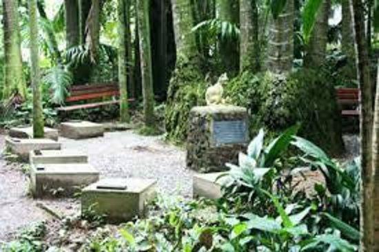 Cemiterio De Gatos