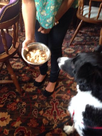 Spread Eagle Hotel: Yummy doggy meal for Ozzy