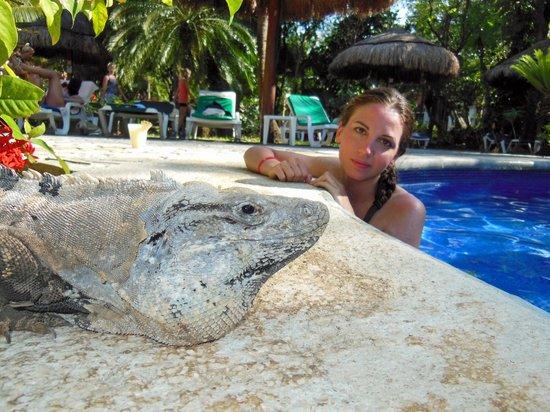 Hotel Riu Tequila : La Mascotte de la Piscine