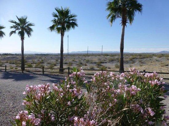 Desert View RV Resort: Desert View