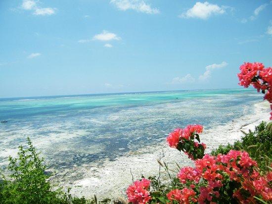 Ras Michamvi Beach Resort : Blue Marlin burger view