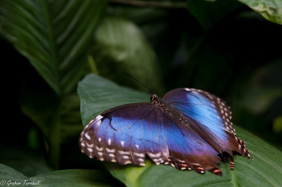 Artis Zoo : Butterfly in the pavilion