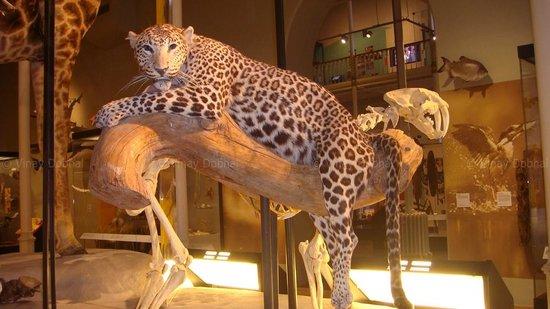 Museo Nacional de Escocia: National Museum Of Scotland