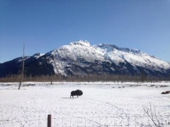 Alaska Wildlife Conservation Center: Beautiful View