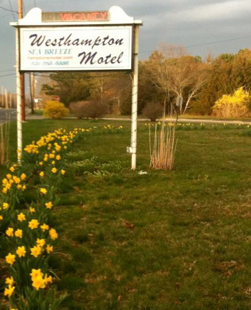 Westhampton SeaBreeze Motel: Welcome to the Westhampton Seabreeze!