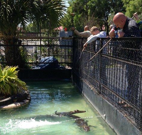 Kissimmee Go-Karts : feeding the gators
