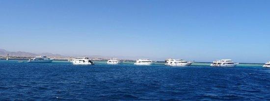 Sinai Safari Adventures : Lots of boats at Tiran Island