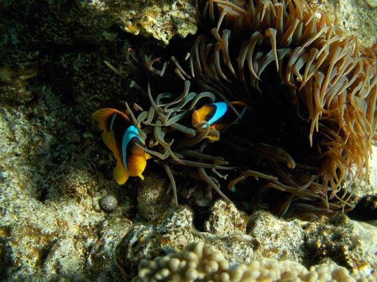 Sinai Safari Adventures : Underwater