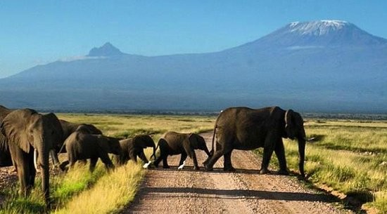 Amboseli National Park: Ключевой снимок!