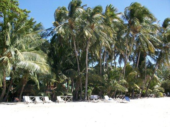 Hotel Tamarindo Diria: Beautiful Palms