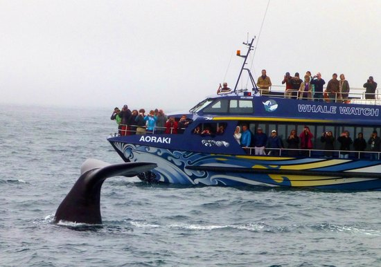 Whale Watch : Awesome whales in Kaikoura