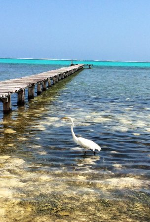 Casa Paraiso: An egret (?) looking for food