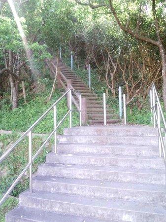 Ishikawa Kogen Lookouts: 展望台へ上る階段
