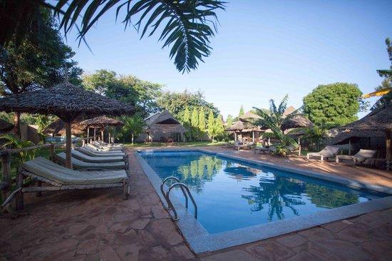 Honey Badger Lodge: gorgeous pool