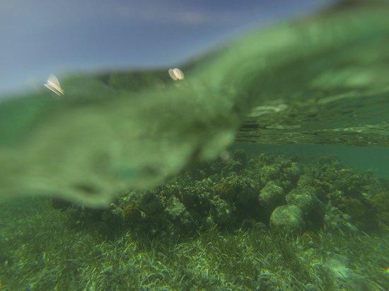 Sin Duda Villas : snorkelling fun
