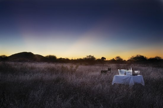 Molori Safari Lodge : Drinks