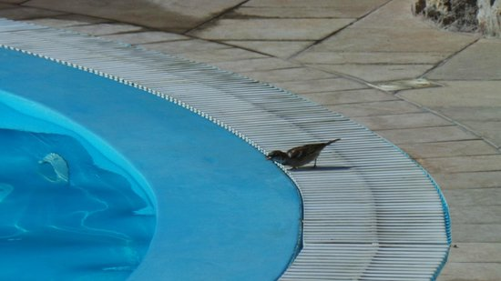 Anatoli Hotel: Pajarito en piscina