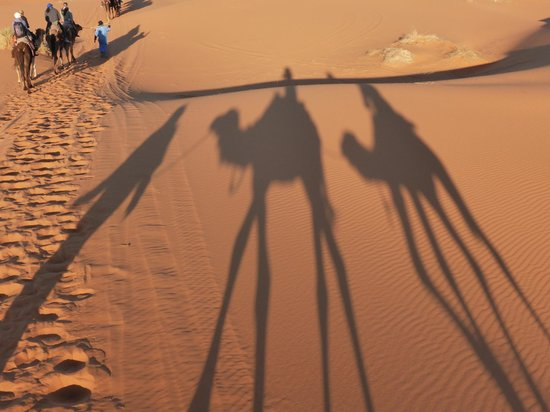 Marrakech Camel Trips: Camel Trekking