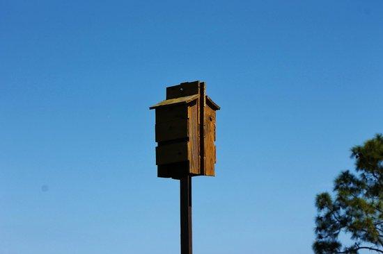 Savannas Preserve State Park: Bat houses