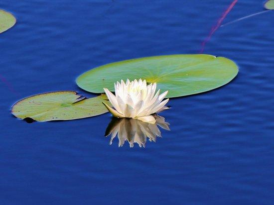 Savannas Preserve State Park: Lovely lily