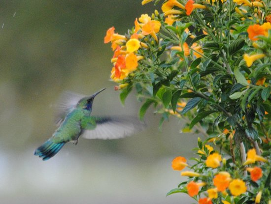 Finca Lerida: Hummingbird