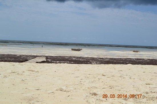 Dream of Zanzibar: Passage dans les algues
