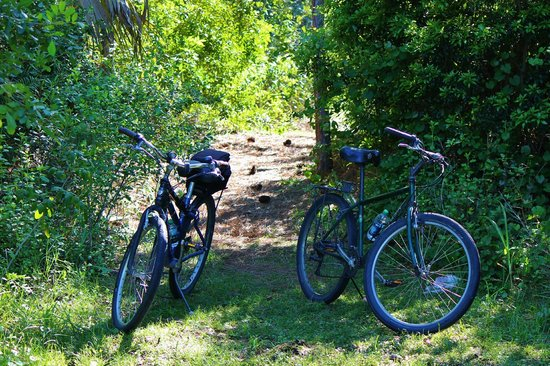 Spruce Bluff Preserve: Trail can be biked easily