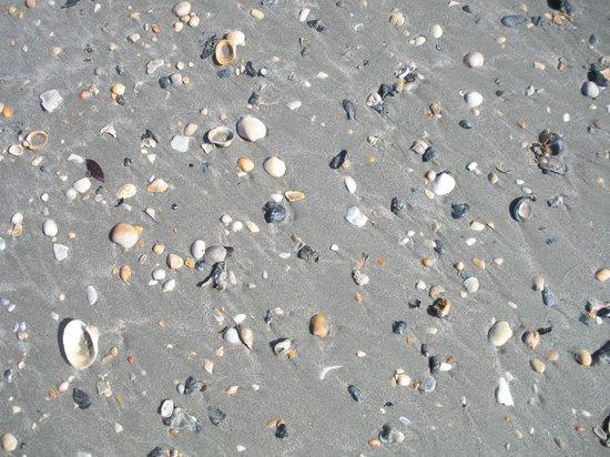 Sea Watch Resort: shells galore