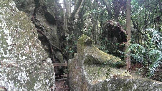 Kawiti Caves : Mossy rocks and ferns outside Kawiti Glow Worm Caves