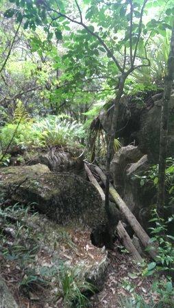 Bush Walk outside Kawiti Caves