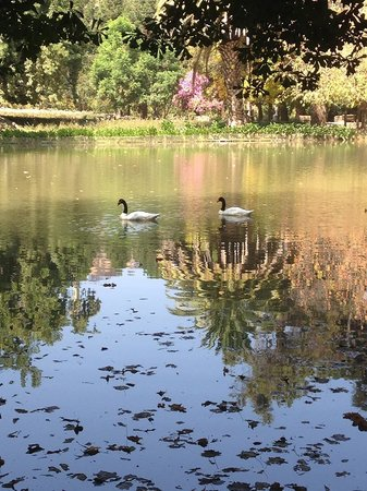 Casa Real Hotel at Santa Rita Vineyards: The pond and gardens