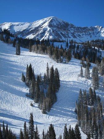 Snowbird Ski and Summer Resort: Fresh Powder!