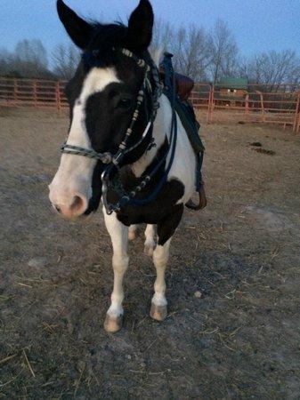 Bucks and Spurs Guest Ranch: Shadowdancer