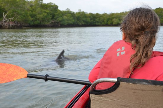 Shurr Adventures Everglades: Close contact with Dolphins at 10 000 island tour