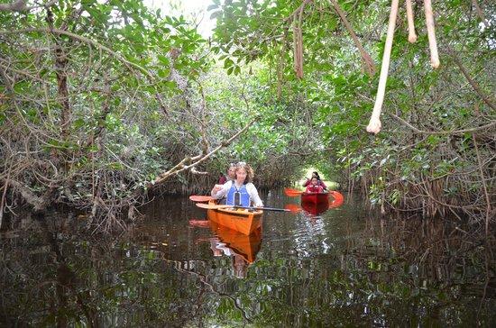 Shurr Adventures Everglades: Sunset trip at Mangrove tunnels