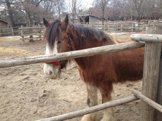 Riverdale Farm: Beautiful clydesdale horse