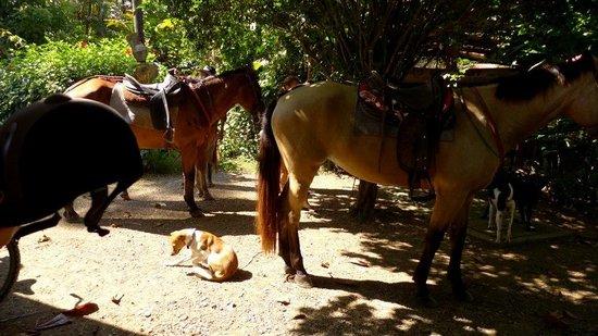 Centro Turistico Brigitte: Brigitte's horses