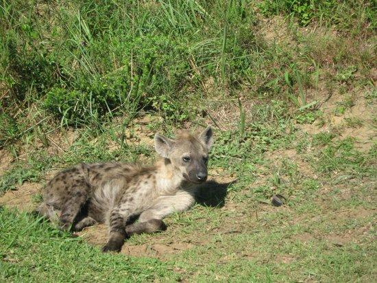 Saint Lucia Estuary: we saw hyena on the drive to cape vidal