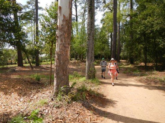 Mercer Arboretum & Botanic Gardens : One of the many trails