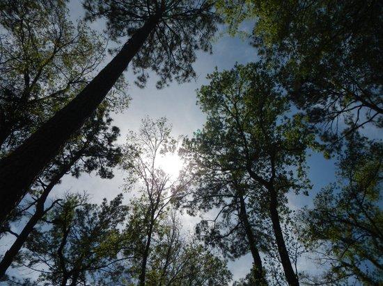 Mercer Arboretum & Botanic Gardens : Beautiful trees