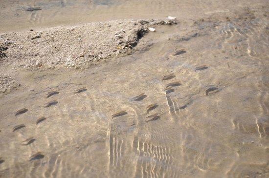 Salt Creek Interpretive Trail : group of pupfisth
