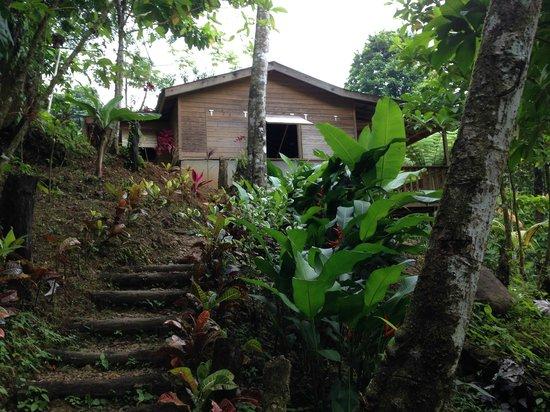 Roots Jungle Retreat: Arawak view from below