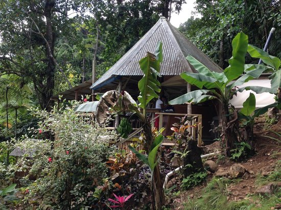 Roots Jungle Retreat: Roots