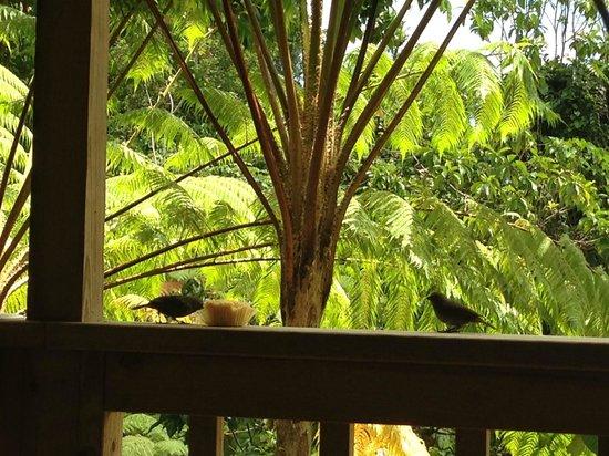 Roots Jungle Retreat: Room visitors