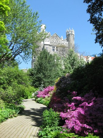 Casa Loma: Azaleas blooming by the pathway