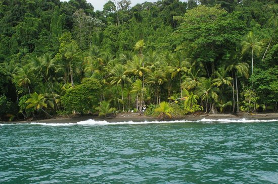 Casa Corcovado Jungle Lodge : View from the ocean