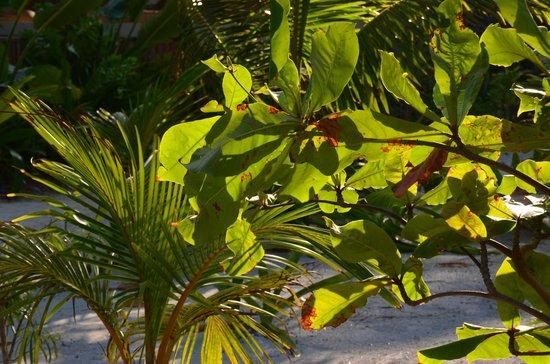 El Secreto: Tropic foliage on grounds