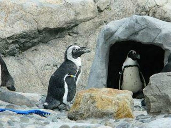 Mystic Aquarium: Penguins were so cute